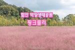 함안 악양생태공원 핑크뮬리, 핑크빛 가을이 너무 반가워