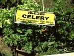 마이너스 칼로리 푸드에 대한 진실은? 아무리 먹어도 살 안찌는 음식 진짜로 존재할까?