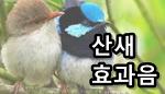 산새 소리 배경/효과음 다운로드