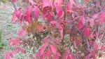 [행복찾기] 죽풍원의 가을