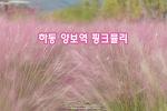 하동 양보역 핑크뮬리와 코스모스, 색이 예쁜 가을이다
