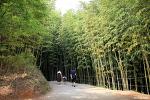 대나무 숲, 죽녹원   담양 가볼만한곳
