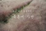 """요즘 제주, 핑크뮬리 성지 """"북촌에 가면"""""""