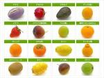 일본어 과일(果物)이름 배우기