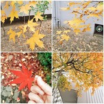 가을 끝에서 본 양재천과 공원 정경