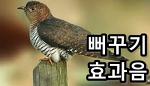 뻐꾸기 소리 효과음 mp3 다운로드
