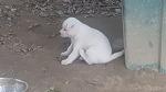 (강아지)귀여운4남매