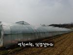 [연천여행] 봄내음 가득 연천농장에서 삼겹살 파티 즐기기