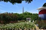 올림픽공원 장미 개화 상태, 축제기간, 광장위치