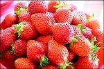 성주 참외,고령 딸기-산지에서 사기