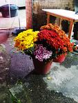 꽃집앞에 가을꽃 향기가 진하다