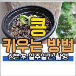 콩 심는 방법과 콩 키우기 일주일간 자라는 과정 촬영