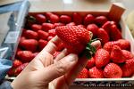 스페인 우리 마을 구멍가게의 너무나 저렴한 딸기