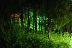 동네공원 야경