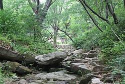 서울 도심 나들이를 계곡으로 떠난다면?