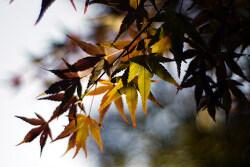 가을...
