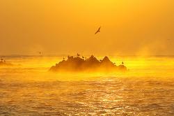 대왕암 - '황금빛 환상의 해무를 만나다'