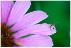 꽃과 곤충