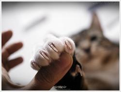 내 발톱에 손대지 마라옹~