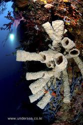 "Simon's Undersea Travel 49 ""U/W view of Mactan, Cebu, Philippines"""
