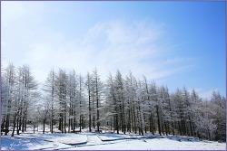 함백산(咸白山)의 봄 雪景