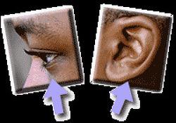 난독증 원인: 듣는 것이 문제 아니면 보는 것이 문제?