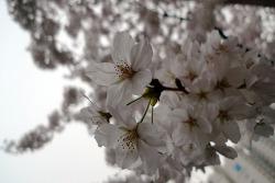 2010.04.14 겨울의 중심에서 봄을 외치다