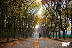 떠나는 가을과 인천대공원