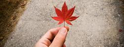 # 가을을 담다 :) (2008. 11. 16)