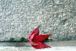 가을이 남기고 가는 흔적