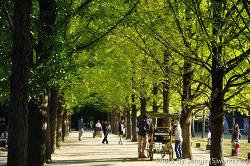 남이섬 나뭇길