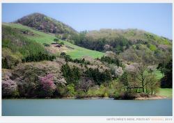 서산 용비지 (봄이 그린 그림)