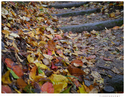 쌀쌀한 가을