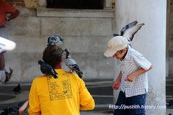 탄식의 다리를 지나는 곤돌라 & 베네치아 산마르코 광장 비둘기 떼의 습격 !