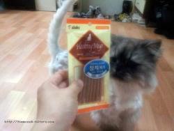 고양이간식 추천 참치져키 후기 사료보다 더 좋아하는 고양이간식