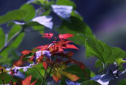 가을로 향해 다가 가는 홍제천