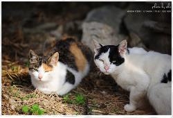 뭘봐? -시골의 방랑 고양이