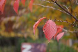 빨간 가을