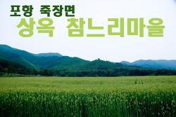[포항면단위투어] 죽장면 -- 참느리마을 밀밭과 보리밭