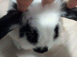 토끼 키울 때 Tip