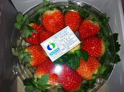 딸기 출하 하는 [푸른농산] 고객님 방문