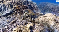 Google Map] 구글이 바닷속을 들여다 볼수 있게 만들다!