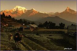 中國의 네팔 工程