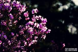 꽃과 아이