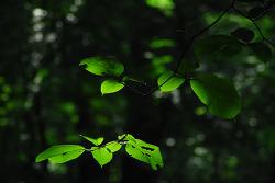 초록세상으로