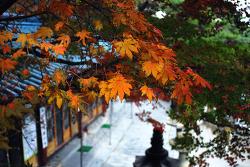도선사의 가을 향기