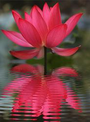법구경 | 담마파다 19.진리에 서있는 님의 품 [Dhammatthavagga]