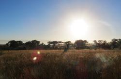 남아공 사파리의 추억을 되새기는 4월