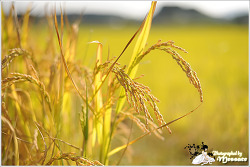 가을의 길목에서 바라보는 시골풍경