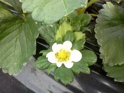 꽃 피면 봄이 올까요~